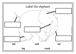 Label-the-animals.pdf