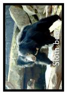 Animal-photos.pdf
