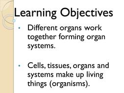 Organ-System-PP.pptx