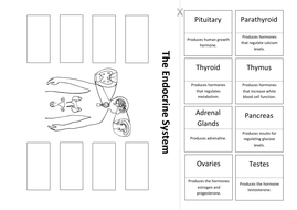 The Endocrine System: Create a Labelled Diagram