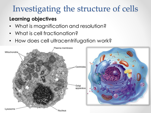 AQA AS & A-level Biology (2016 specification). Section 2 Topic 3: Cells. 1 Investigating  structure