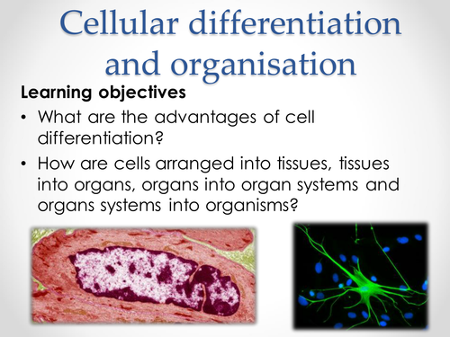 AQA AS & A-level Biology (2016 specification). Section 2 Topic 3: Cells. 5 Cell differentiation