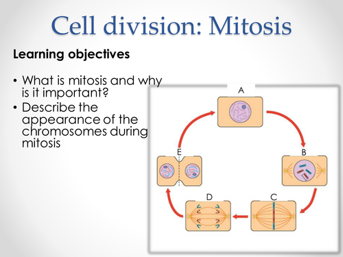 AQA AS & A-level Biology (2016 specification). Section 2 Topic 3: Cells. 7 Mitosis