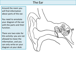 The ear create a labelled diagram by ineedtoteachthat teaching informationcx ppt theearpptx ccuart Gallery