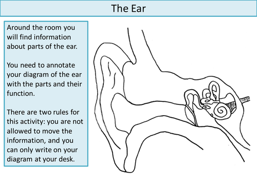 The ear create a labelled diagram by ineedtoteachthat teaching the ear create a labelled diagram by ineedtoteachthat teaching resources tes ccuart Images