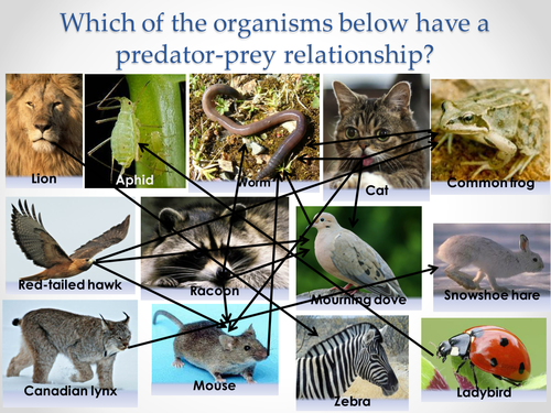 AQA A-level Biology (2016 specification). Section 7 Topic 19: Populations 4 Predation