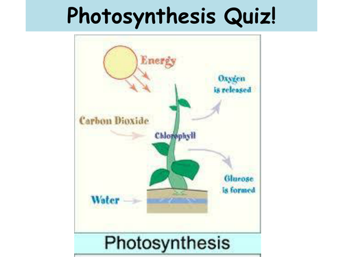 photsynthesis quiz Quizlet provides photosynthesis activities, flashcards and games start learning today for free.