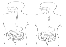 Digestive-System-Picture.docx