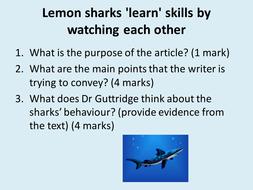 comprehension-sharks.pptx