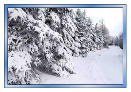 Winter-photos.pdf