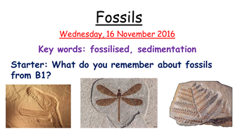 How-fossils-are-formed.pptx