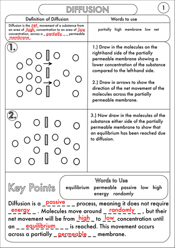 GCSE Diffusion, Osmosis and Active Transport Worksheets by ...