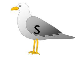 Phonemes-on-seagulls.pdf