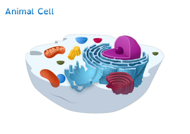 Animal cell diagram to label by treeickle teaching resources tes animal cellpdf close animal cell diagram to label ccuart Image collections