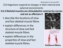 3.6.3 Lesson-5-Fast-and-Slow-Muscles.ppt