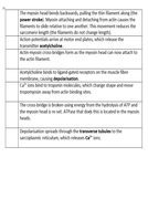 3.6.3 Lesson-3---Sequencing-Handout.docx