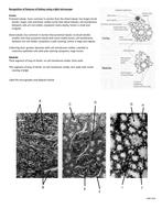 3.6.4.3 Kidney-Identification-sheet.doc