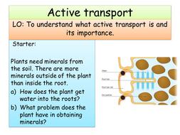 Active transport AQA triple Biology