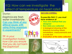 PAG-11-Heart-RATE-TEMPERATURE-TES.pptx