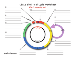 Cell_Cycle.pdf