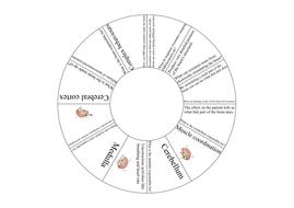 AQA GCSE Biology 9-1 (2016) The Brain TARSIA PUZZLE by