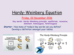 AS Biology- Hardy-Weinberg Principle and Equation