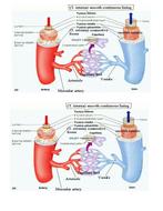 blood-transport-wk1-blood-vessels.doc