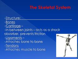 The-Skeletal-System.ppt