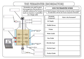 gcse biotechnology the fermenter worksheet by beckystoke teaching resources tes. Black Bedroom Furniture Sets. Home Design Ideas