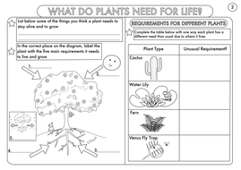 Year 3 Science: Plants Topic Worksheets