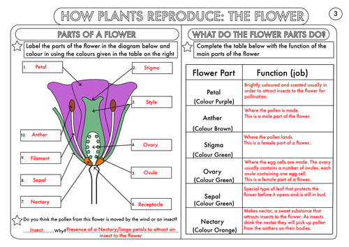 Year 3 Science Plants Topic Worksheets by beckystoke Teaching – Parts of Flower Worksheet