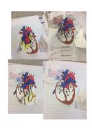 Heart-pics.docx