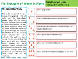 The-Transport-of-Water-in-Plants-pathway-activity.pptx