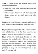 Water-movement-through-roots-model-stages.docx