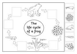 Life Cycle of a Frog- Powerpoints, games, activities