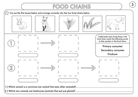 year 4 science animals including humans digestion teeth and food chains worksheets by. Black Bedroom Furniture Sets. Home Design Ideas