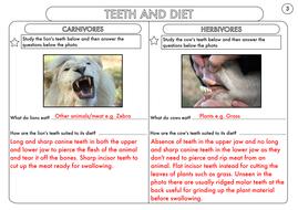 Year-4-Teeth-And-Diet-Worksheet-Answers.pdf