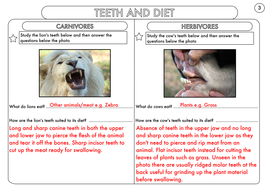 Year-4-Teeth-And-Diet-Worksheet-Answers.pdf