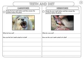 Year-4-Teeth-And-Diet-Worksheet.pdf