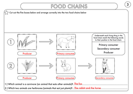 Year-4-Food-Chains-Worksheet-Answers.pdf