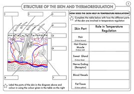 GCSE Biology: Homeostasis Worksheet Pack by beckystoke | Teaching ...