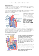 3.2.4---The-Structure-of-The-Heart.docx