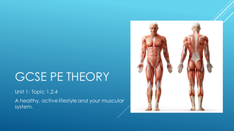 1.2.4-Muscular-System.pptx
