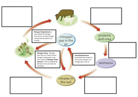 Nitrogen Cycle Full Lesson by joeshilly93 - Teaching Resources - Tes