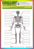 Starter-Activity---Label-the-bones.pdf