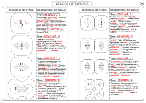 A level biology meiosis activity by beckystoke teaching resources a level biology meiosis activity by beckystoke teaching resources tes ccuart Image collections