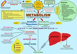 METABOLISM-AQA-4.4.2.3-(v3).pdf