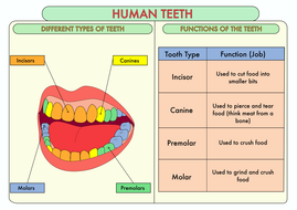A3-Poster-on-the-Teeth-Colour-y4.pdf