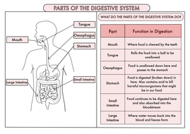 Science Poster Pack On The Digestive System and Teeth for Year 4