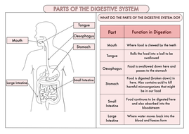 Science Poster Pack On The Digestive System and Teeth for ...